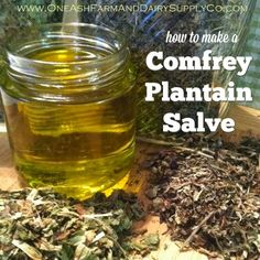 How to make a simple comfrey plantain salve - good for people or critters!