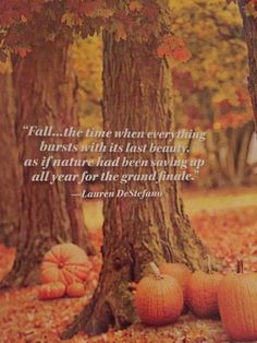 My favorite time of the year 🍂🍂🍂 Seasons Of The Year, Best Seasons, Autumn Scenes, Autumn Cozy, Autumn Aesthetic, Happy Fall Y'all, Fall Pictures, Hello Autumn, Fall Harvest