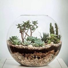 Make your own terrarium with this DIY recipe Indoor Succulent Planter, Succulent Bowls, Hanging Succulents, Succulents Garden, Hanging Plants, Terrarium Diy, Small Flower Gardens, Mini Plants, Plants Indoor