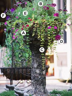 BHGsite-Create Bold,Dramatic Container Gardens-21 different containers with varieties used listed!