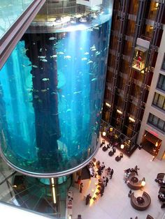 Placed at the lobby of the Radisson SAS Hotel in Berlin, the 25 meters high AquaDom is the largest cylindrical aquarium ever built. Filled with about 900,000 liters of seawater, it contains some 2600 fish of 56 species… Guests and visitors are able to travel through the aquarium in a glass-enclosed elevator to reach a sightseeing point and restaurant under the glass roof. Two full-time divers are responsible for the care and feeding of the fish and maintenance of the aquarium.