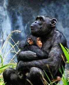 Every mother loves her children. Let's look after our planet and all it's living creatures. Stand up and support the organizations fighting to save endangered species
