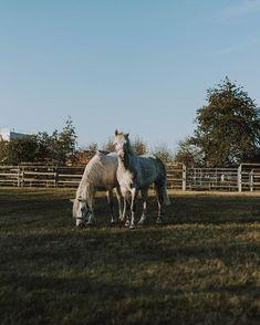 SARAH   Photographer (@fotografierende) • Instagram-Fotos und -Videos Instagram Accounts, Horses, Videos, Pictures, Photography, Animals, Photos, Animales, Animaux