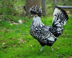 курица Источник фото: flickr.com/jety