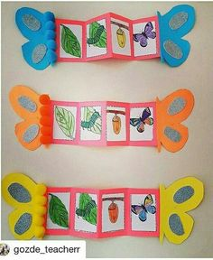 Life cycles preschool - Nature and society Preschool Education, Preschool Science, Science Activities, Preschool Activities, Preschool Classroom, The Very Hungry Caterpillar Activities, Life Cycle Craft, Insect Crafts, Nature Crafts
