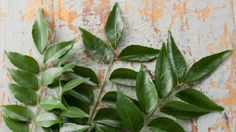 Curry Leaves Benefits: The Spicy Route to Good Health - NDTV