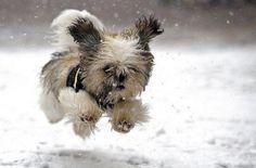 snow dog....aaaawwwwwww looks like a live gremlin