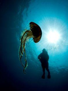 Hidden Beauty Of Nature Under The Water 4