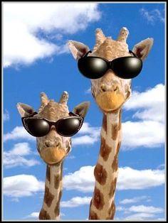 a+girafa+e+os+doidos.jpg (314×418)