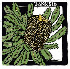 The Saw Banksia - Banksia serrata - is a common Banksia…