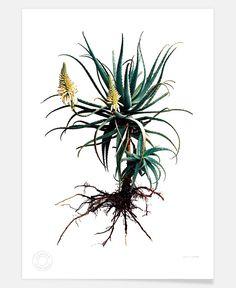 Classic-Botanical-Whole-plant-01 of clintonfriedman now on JUNIQE!