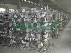 Pigeon Cage, Poultry Cage