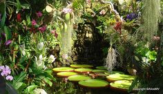 Mystical water garden