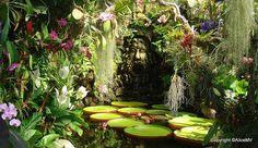 La Mortella Gardens, Ischia, Italy