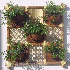 cuadro vivo plantas - Buscar con Google