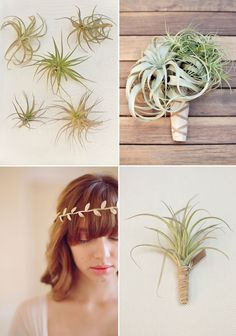 Wow!! floral inspiration: air plant bouquet & boutonniere... would be easy to do in advance.