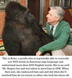 Awwww, I love primates!