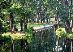 Look Park, Northampton, MA.  Paddle Boats lined up and ready... By Heartlover1717, via Flickr