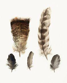 plumas de pintura acuarela arte pared decoración por amberalexander
