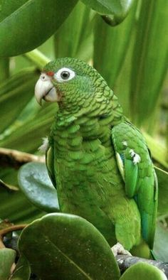 New Cost-Free green parrot Ideas Maintaining ones feathered friend healthy means regularly maintaining their own health. Despite the fact that puppy hen Tropical Birds, Exotic Birds, Colorful Birds, Pretty Birds, Beautiful Birds, Animals Beautiful, Kinds Of Birds, All Birds, Funny Bird