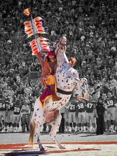 One of the most spectacular traditions in all of college football occurs in Doak Campbell Stadium, the home of the Florida State University Seminoles. Chief Osceola and Renegade! My favorite part of an FSU ball game!
