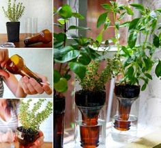 DIY Gardening Bottles Pictures, Photos, and Images for Facebook, Tumblr, Pinterest, and Twitter