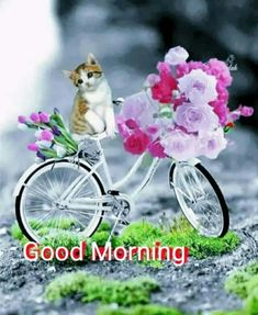 Gud Morning Images, Good Morning Gif, Good Morning Messages, Olympic Gymnastics, Cute Messages, Cute Little Animals, Tuesday, Good Morning Images, Good Morning Wishes