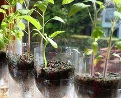 Como fazer um vaso de plantas de garrafa pet | Reciclagem no Meio Ambiente