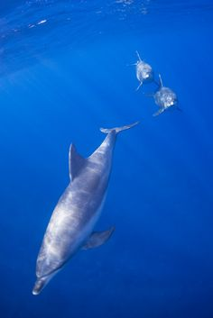 Dolphins in the blue.... visual freedom