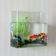 1000 images about fish aquarius on pinterest wall for Small glass fish tank