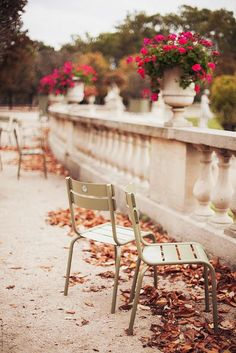 Autumn in Paris, photo by Carin Olsson          LOVE IT!!  So beautiful, the crispy cold air and the flowers...lovely!!