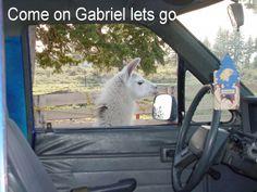Maggie getting Gabriel in trouble www.riverdancefarm.com