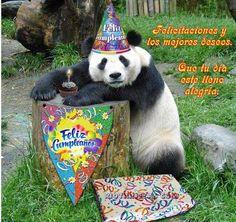 happy birthday you party animal - Happy Birthday Panda Happy Birthday Dana, Funny Happy Birthday Meme, Happy Birthday Brother, 20th Birthday, Happy Birthday Images, Birthday Pictures, Birthday Month, Birthday Quotes, Birthday Wishes