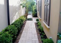 Side yard path lined with bull rock and soften by lush Loropetalum.