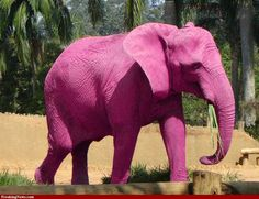 The Circle's Pink Elephant Guarantee means that, if you want it, we'll get it. even if what you want is a pink elephant! Pink Love, Pretty In Pink, Pink And Green, Hot Pink, Tout Rose, Elephant Pictures, Elephant Love, Purple Elephant, Funny Animals