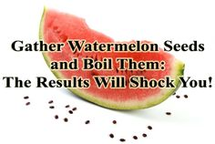 Little do we know, watermelon seed are healthy for our body and there are tons of health benefits we can get from eating watermelon seeds. http://www.extremenaturalhealthnews.com/gather-watermelon-seeds-and-boil-them-the-results-will-shock-you-recipe/