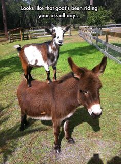 For Kids: Farm Animals, Wild Animals Funny videos For Children to watch ! Funny Animal Pictures, Cute Funny Animals, Funny Cute, Best Funny Pictures, Funny Donkey Pictures, Funny Images, Funny Photos, Wild Life, Farm Animals