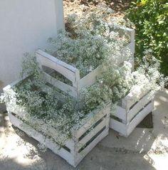 Enamorados de la paniculata. Perfectas en cualquier lugar #bodas #celebraciones