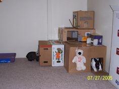 Bunny cardboard castel is the funnest!