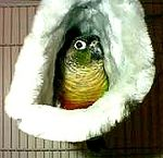 Blue Happy Hut Plush Hideaway for Small Birds by MultiPet. Your bird will love sleeping in privacy and in winter they stay warmer and avoid drafts. My sun conure loves his.
