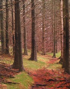 Path in the Woods, Great Spruce Head Island, Maine   ~ by Eliot Porter