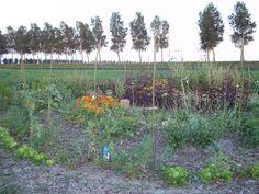 de ronde tuin. met sla, erwten, zonnebloemen, koolrabi, bietjes, rode melde, kamille enz.
