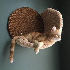 Cheap Patio Furniture, Cat Furniture, Furniture Stores, Furniture Online, Discount Furniture, Furniture Buyers, Furniture Market, Furniture Outlet, Luxury Furniture