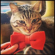 Bonjour ! #mdesego #monday #hello #june #juin #morning #coffee #matin #lundi #momolechat #cat #chat #noeudpapillon #bowtie #menswear #orange #dapper #ootd