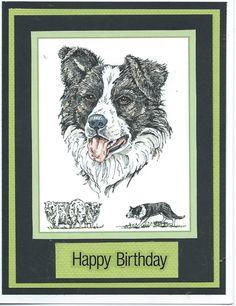 border collie Happy Birthday
