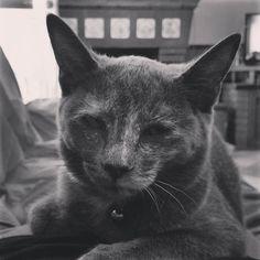 En trance. #Mini #gatos #MisMascotasHola