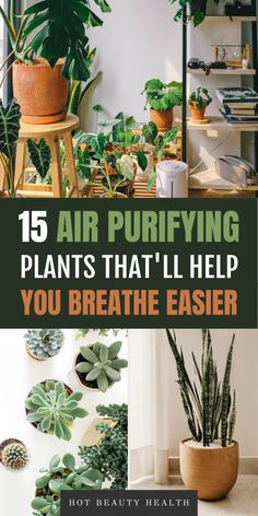 This is a great list of air purifying plants for the home. I love that they're low maintenance and hard to kill. Some of my favorite houseplants: gerbera daises, snake plants, peace lily, and boston ferns are great at purifying the air which is perfect for people with allergies like me. I like hanging them in my bedroom, bathroom and kitchen or office like indoor decor. Many need only low light and are also pet safe. #houseplants #airpurifyingplants #plants