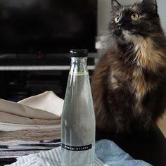 DIY Soodataikina - korvaaja taikataikinalle Vodka Bottle, Healthy