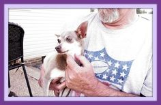 Corrie is an adoptable Chihuahua Dog in Hartsville, TN. 'Hi, I'm Corrie!  Mine is a sad story and I don't like to think about it, but my new rescue mommy says it's important for me to let people know ...