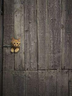隠れようとしてるの?色々はみ出ちゃってる猫48選
